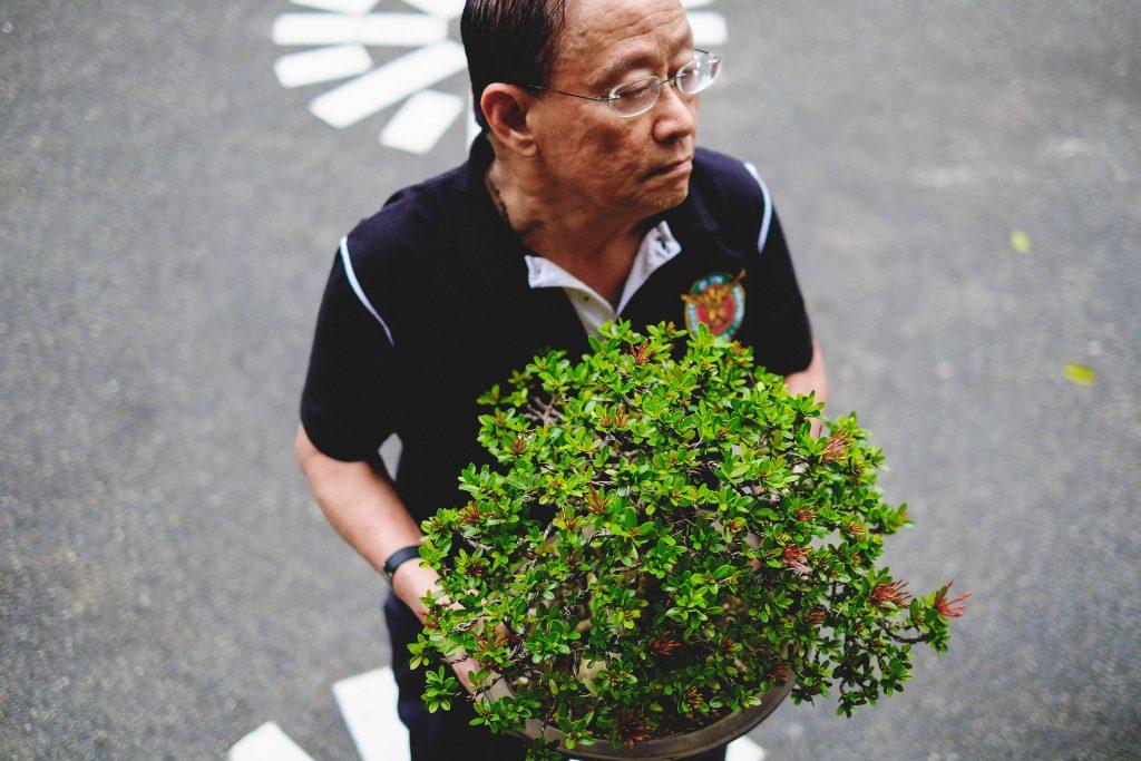 nolisoli profile juan lim bonsai
