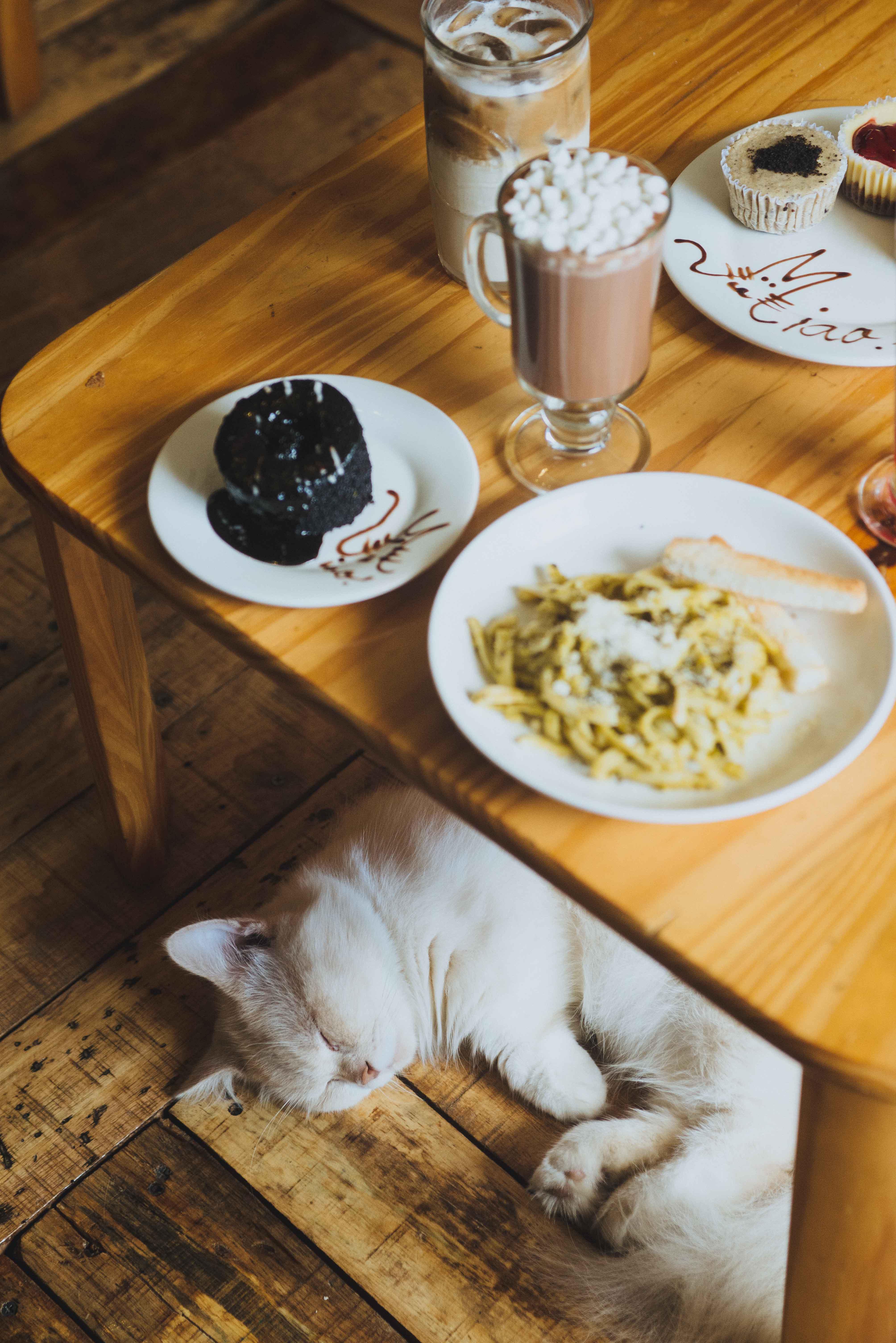eats restaurant miao cat cafe