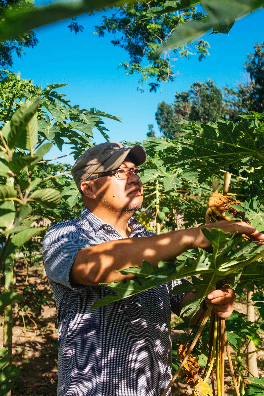 nolisoli be profile angelo valencia kuya pultak tibby farm