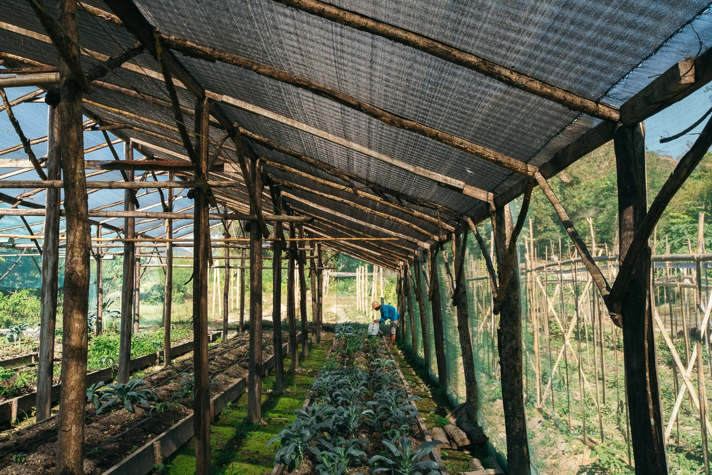 2017-noli-march-feature-farm-ville-27-min