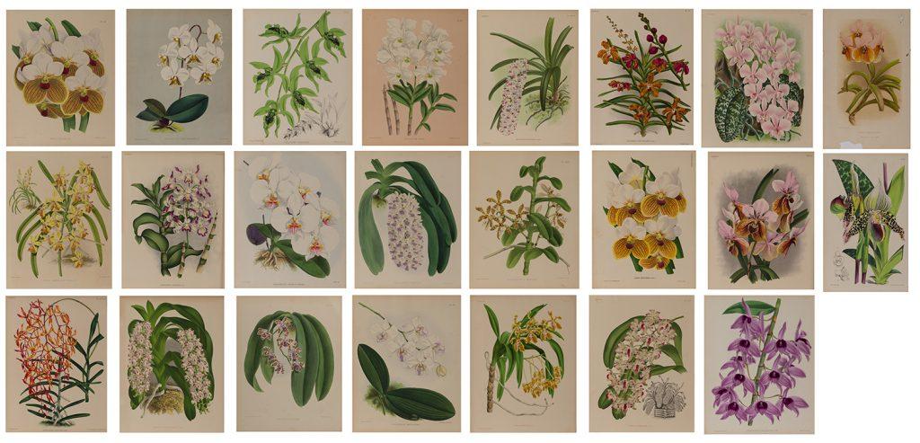10-botanical-prints