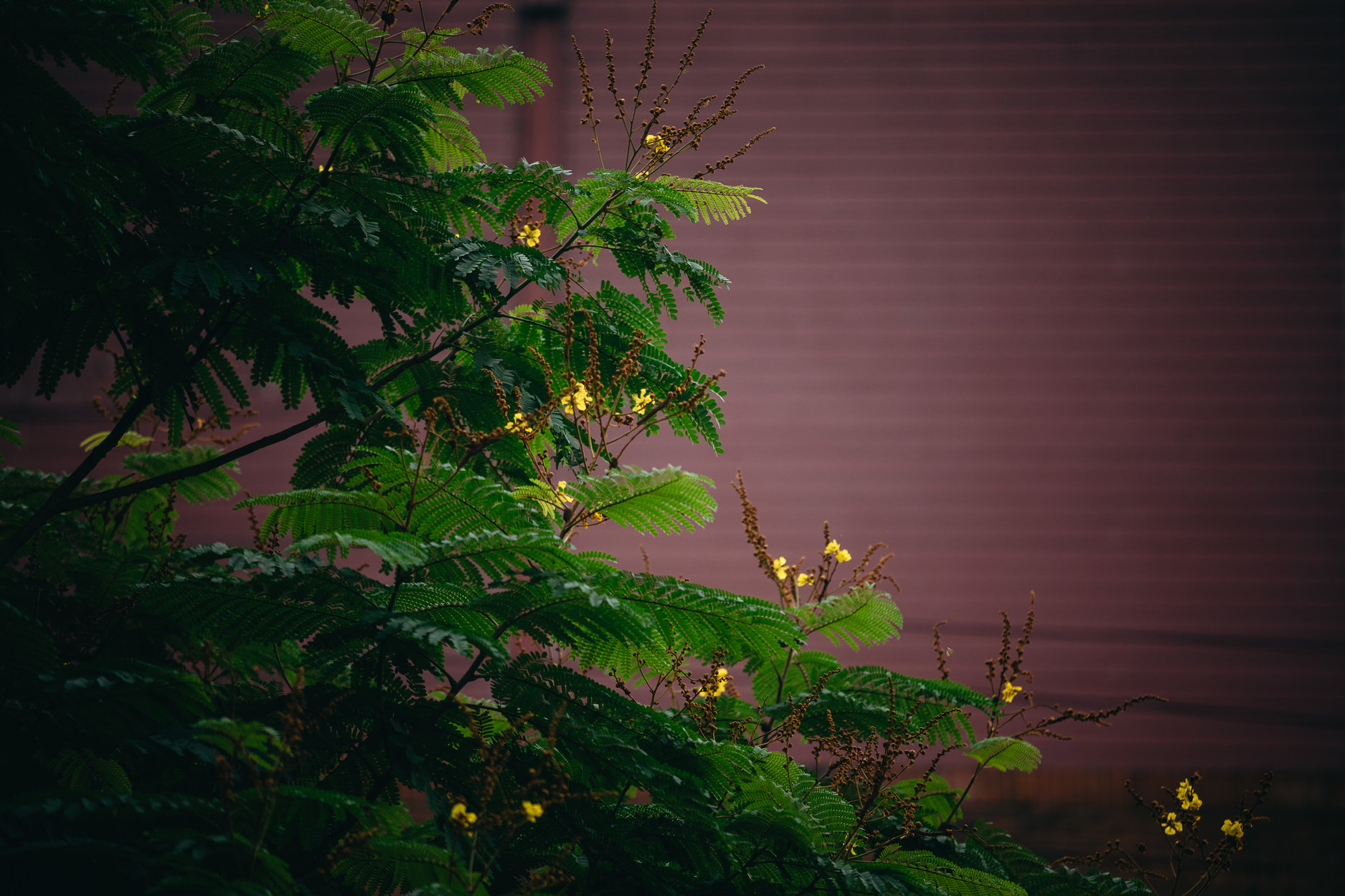 nolisoli be fixture trees up washington sycip garden of native trees