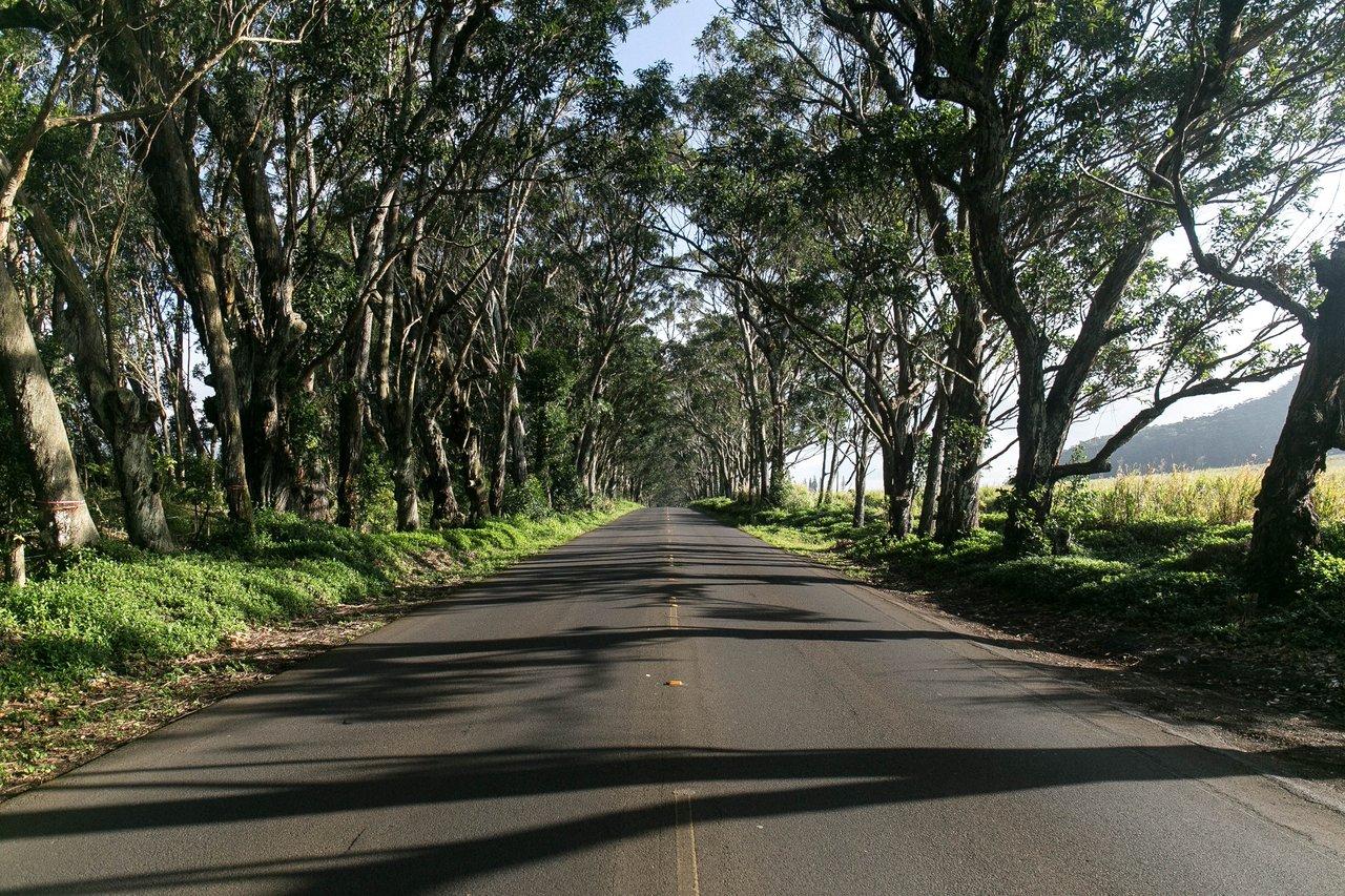 nolisoli news fixture trees road widening