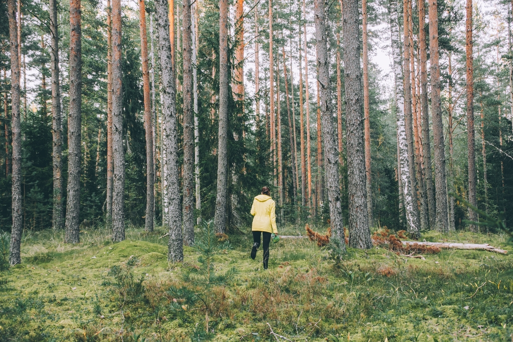 nolisoli care health and wellness forest bathing