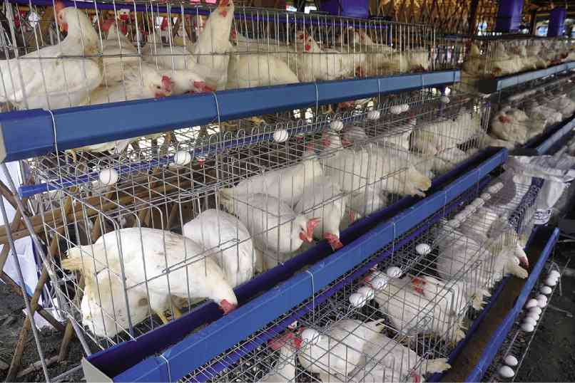 nolisoli be fixture avian flu