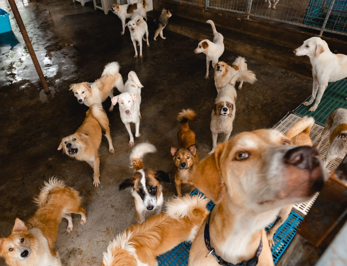 dogs in rescue shelter for adoption