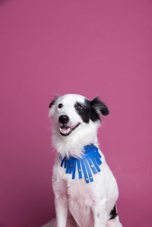 nolisoli the get dog collar