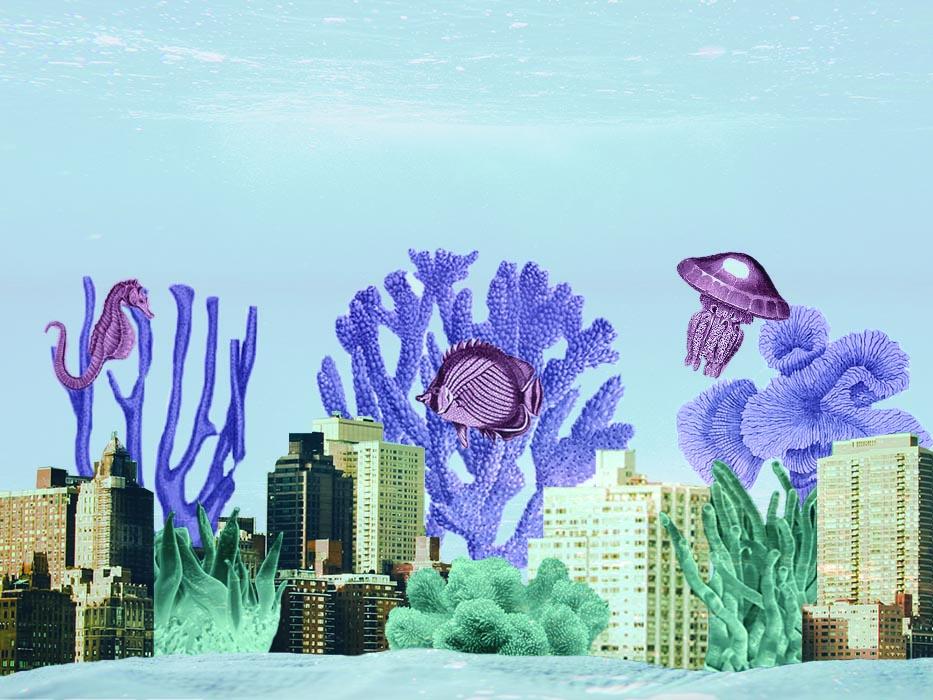 nolisoli be fixture fish sea environment