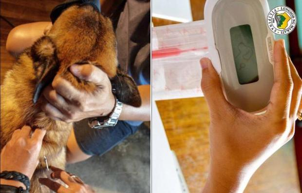 nolisoli dogs cats microchip