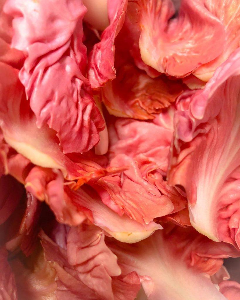 nolisoli pink lettuce