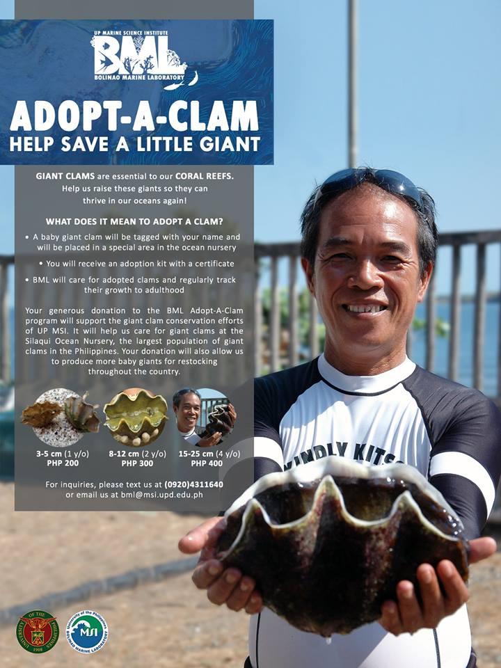 nolisoli marine institute adopt clams