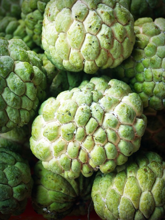 Sugar Apple Diseases