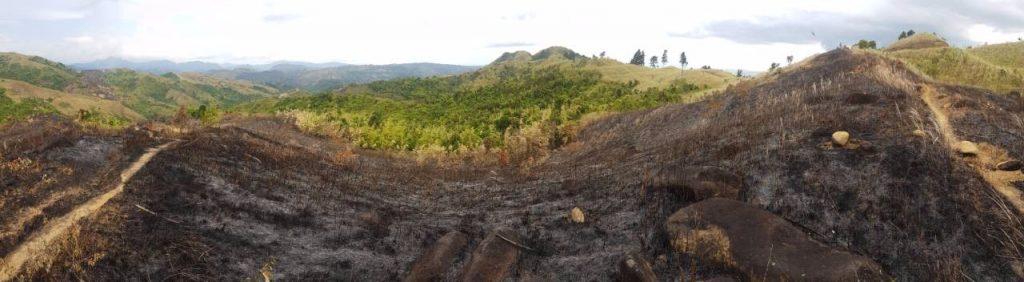 nolisoliph masungi georeseve legacy trail reforestation