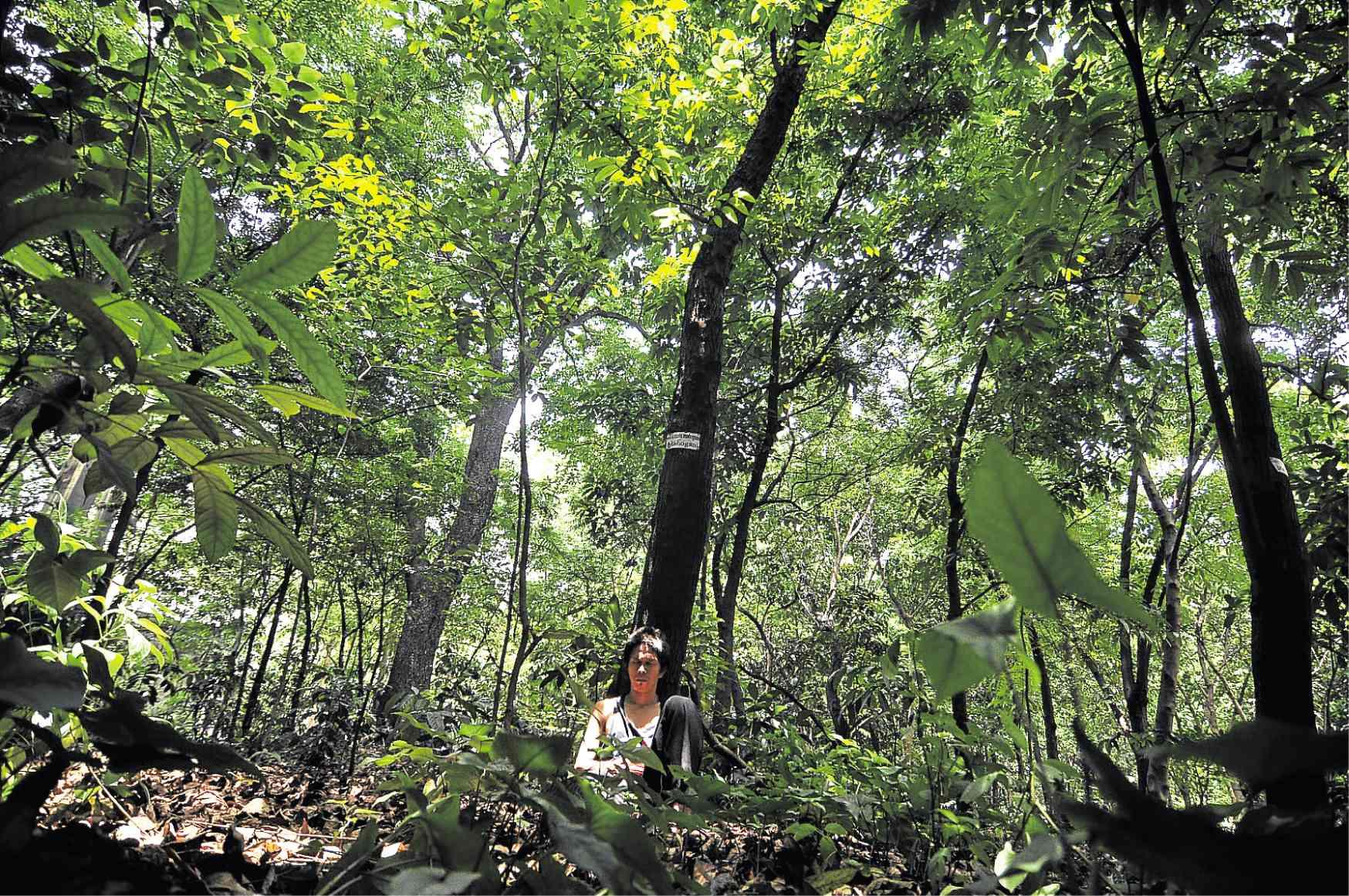 nolisoli arroceros forest park