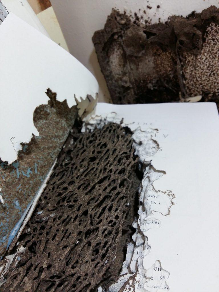 nolisoli fixture reading print damaged books