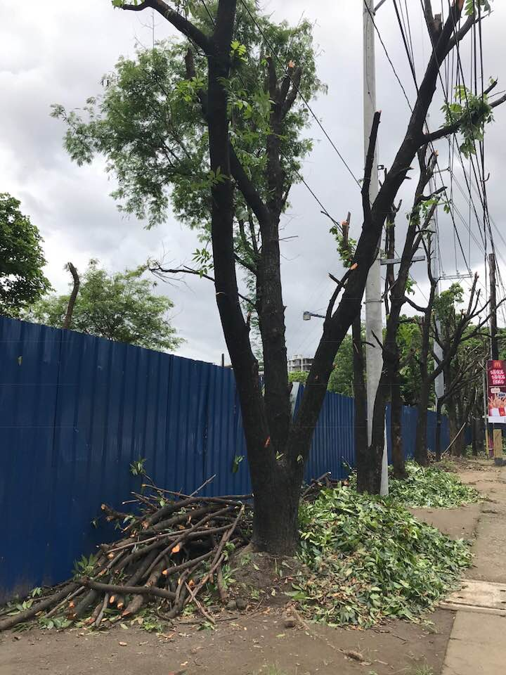 trees being cut down at lawton avenue for road widening