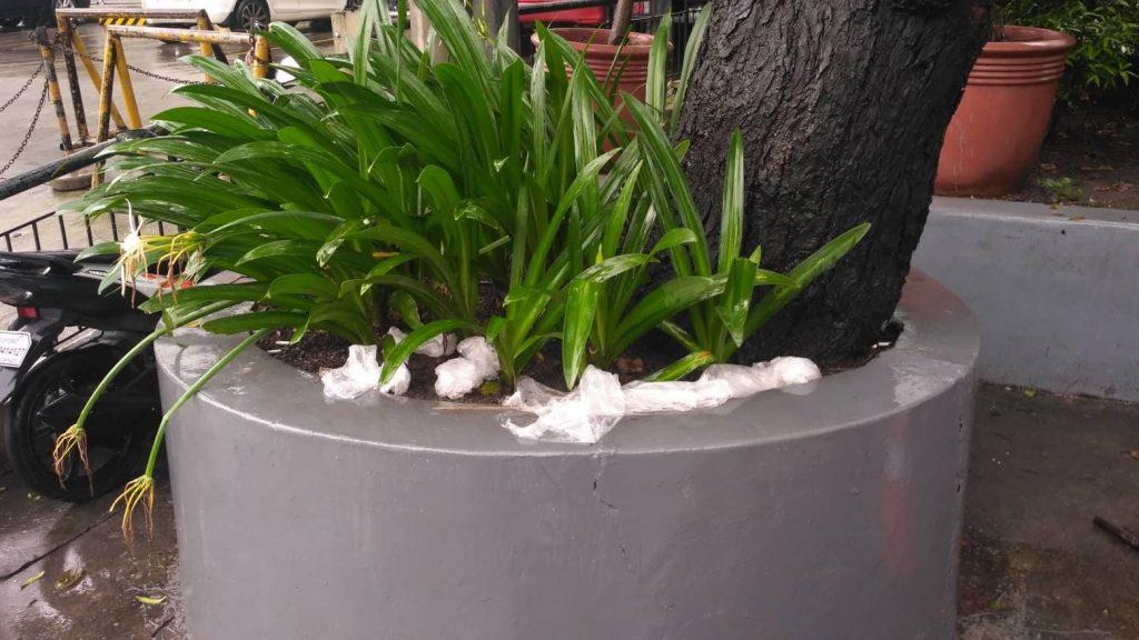 umbrella plastic cases garbage