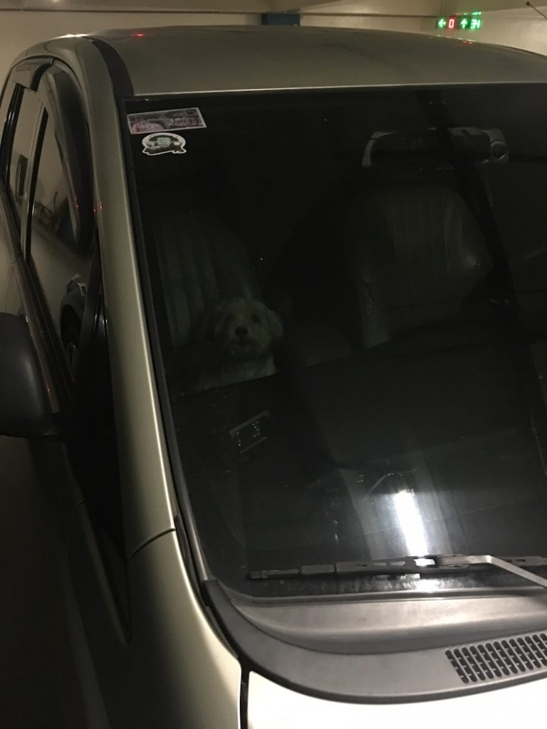 nolisoli fixture negligent pet owners dog locked car hot vehicle