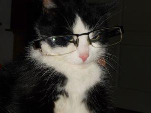 nolisoli fixture animals dog cat expo 2018 glasses