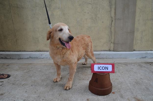 nolisoli.ph k9 dogs adopt pdea
