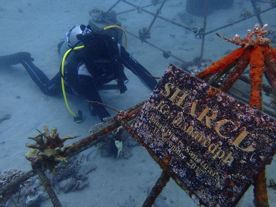 nolisoli charlie corals