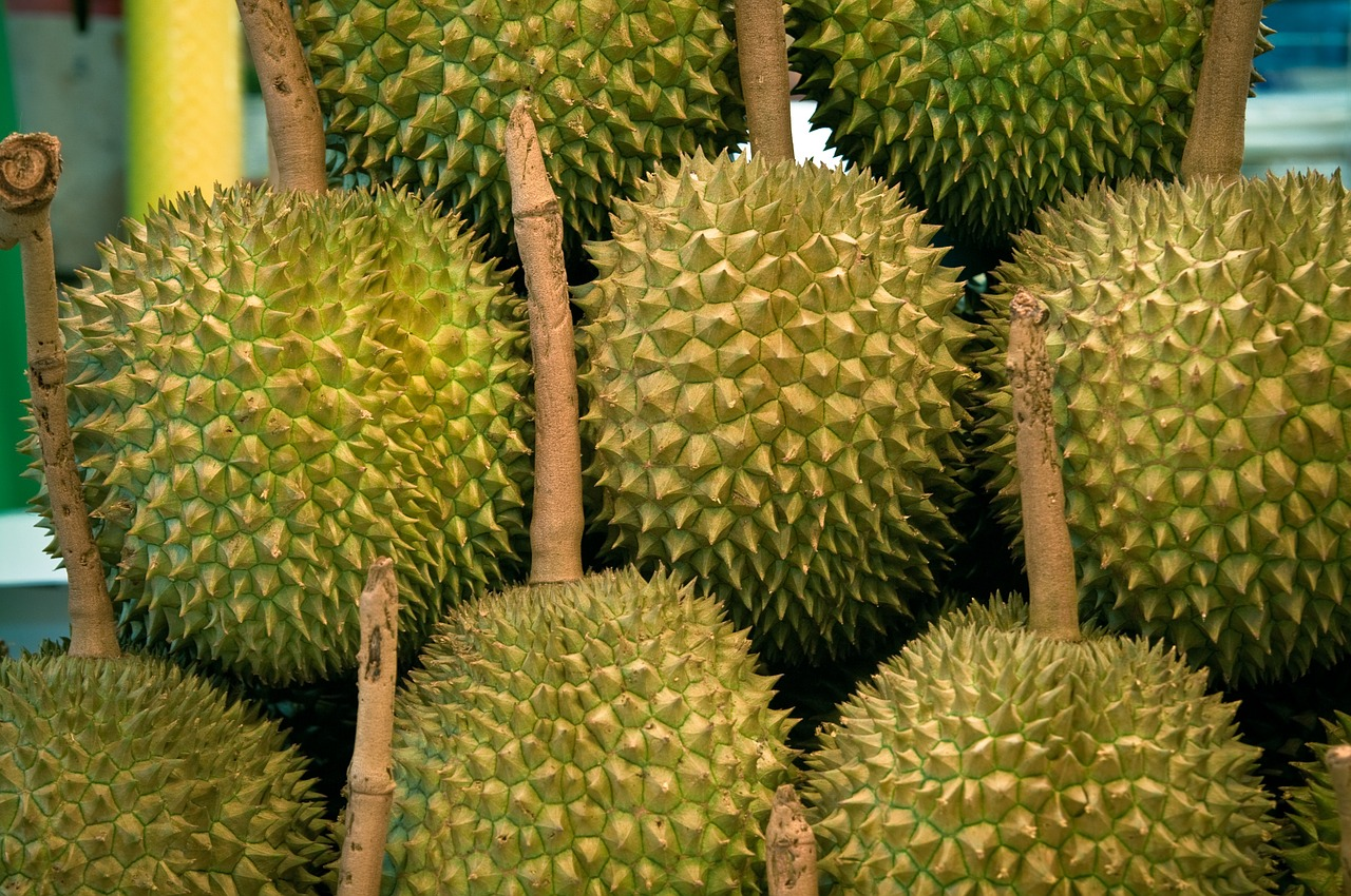 marang durian jackfruit difference