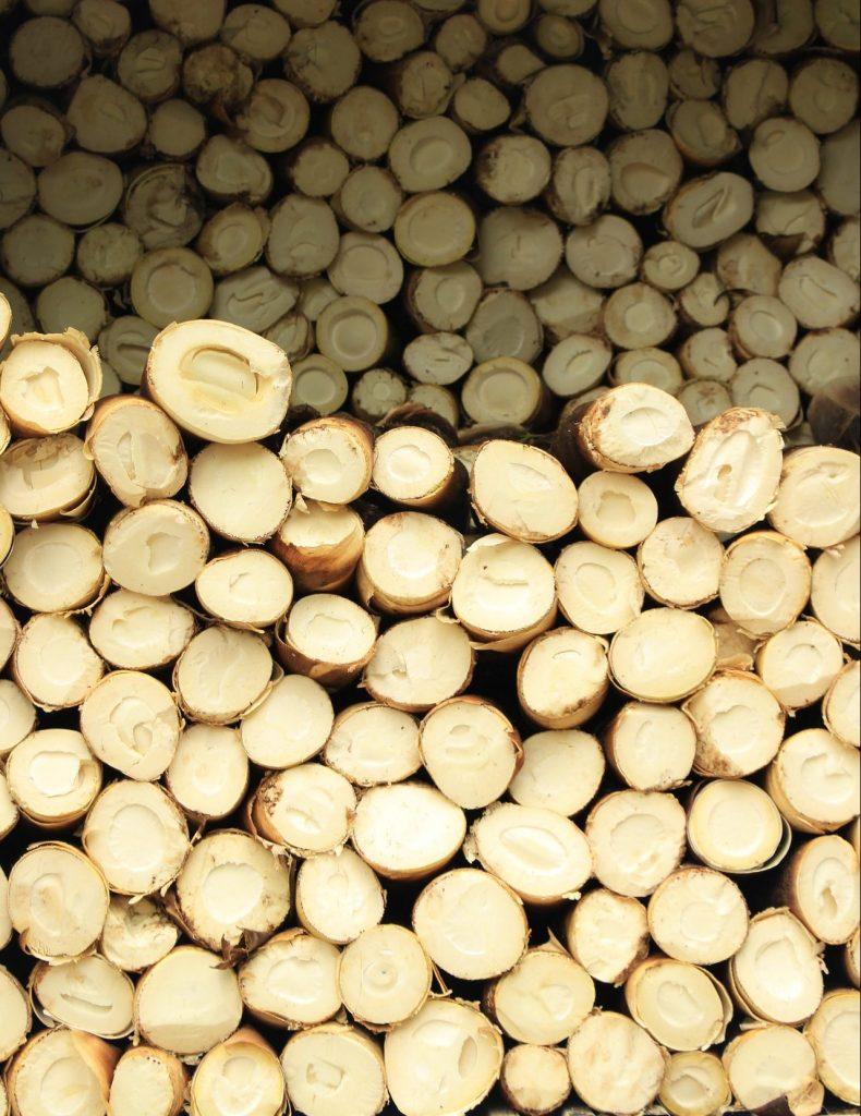 bamboo shoot sashimi