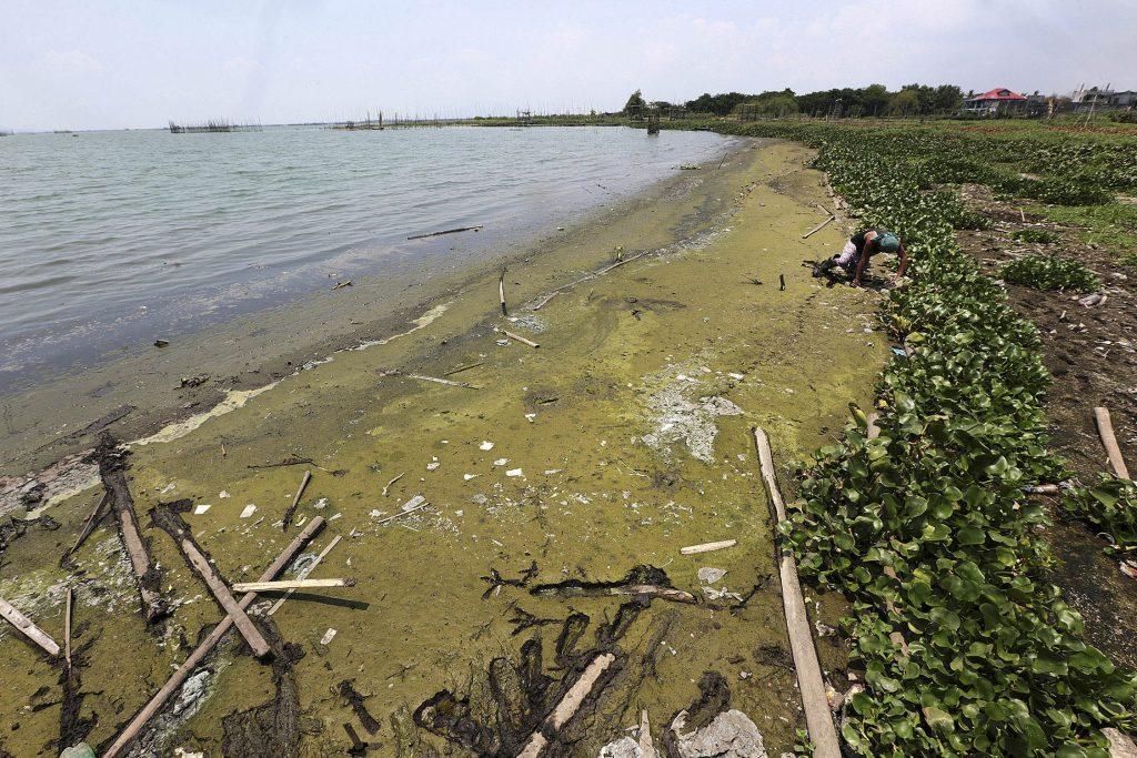 laguna de bay algae