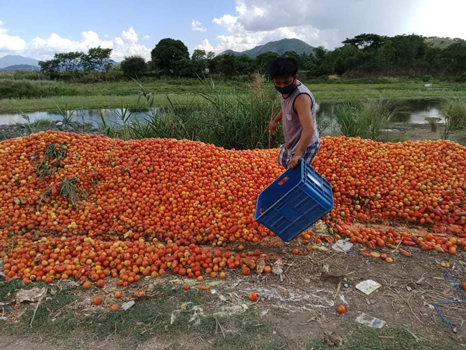 Truckloads of Ifugao farmers' produce are going to waste due to quarantine travel restrictions