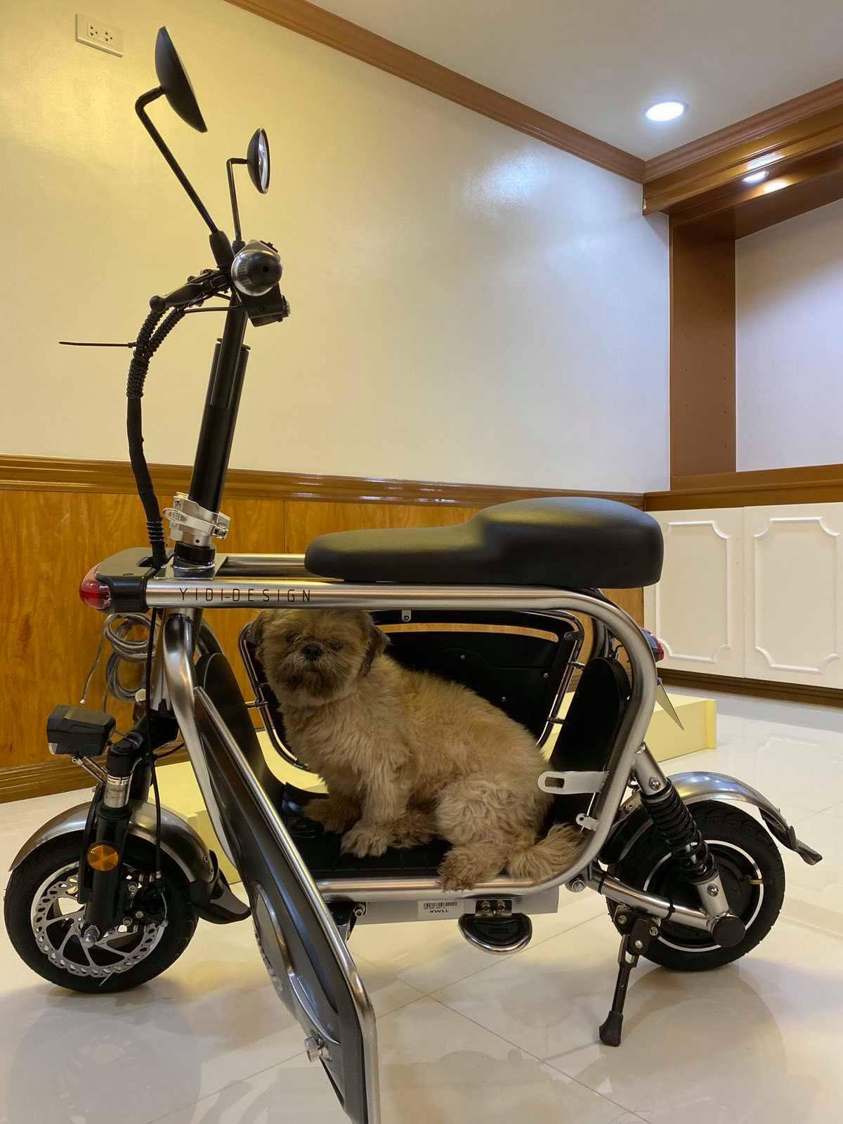 pet-friendly e-bike